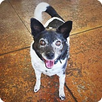 Adopt A Pet :: Sammy - Denver, CO