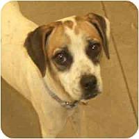 Adopt A Pet :: Tara - Phoenix, AZ