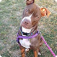 Adopt A Pet :: Sparrow - Irving, TX