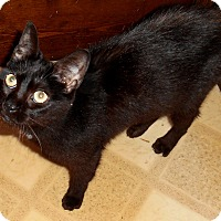 Adopt A Pet :: Esmerelda (toothless) - Chattanooga, TN