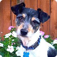 Adopt A Pet :: Wrigley - San Francisco, CA