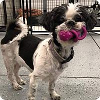 Adopt A Pet :: Dawn Ranger - Urbana, OH