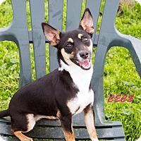 Adopt A Pet :: Cece - Patterson, CA