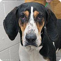 Adopt A Pet :: Wilma - Laingsburg, MI