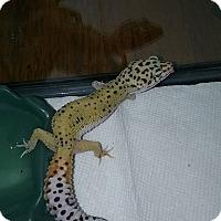 Adopt A Pet :: Olga - Souderton, PA