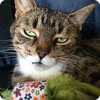 Adopt A Pet :: Piper - Toronto, ON