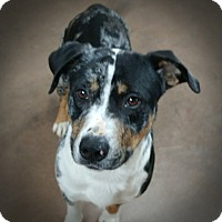 Adopt A Pet :: Lexington - Wilmington, OH