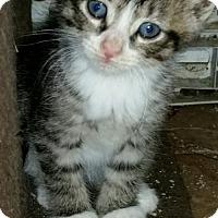 Adopt A Pet :: Bosch - Herndon, VA