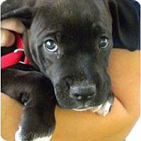 Adopt A Pet :: Lennon - Mission Viejo, CA