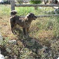 Adopt A Pet :: Wave - Mesa, AZ