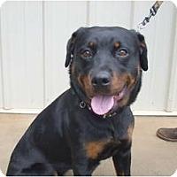 Adopt A Pet :: Carly - Douglasville, GA