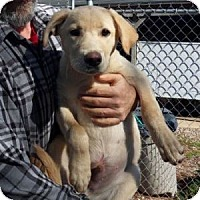 Adopt A Pet :: Happy - Athens, GA
