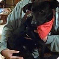 Adopt A Pet :: Diamond Girl - Marlton, NJ