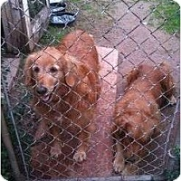 Adopt A Pet :: Lola - Russellville, AR