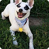 Adopt A Pet :: Delilah - Fort Riley, KS