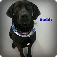 Adopt A Pet :: Buddy - Muskegon, MI