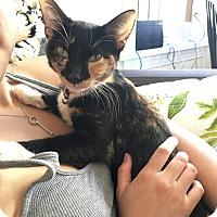 Adopt A Pet :: Lula - Chicago, IL