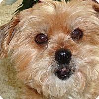 Adopt A Pet :: GINGER-pending - Eden Prairie, MN