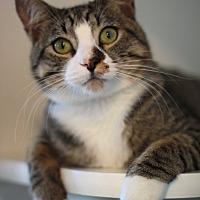 Adopt A Pet :: Gandolph - Marina del Rey, CA