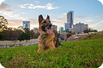 German Shepherd Dog Mix Dog for adoption in Alpharetta, Georgia - CharlieBoy
