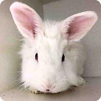Adopt A Pet :: SATIN - Brooklyn, NY