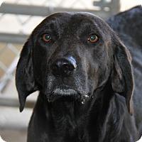 Adopt A Pet :: Jemma - Marietta, OH