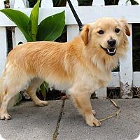 Adopt A Pet :: Chowder - Los Angeles, CA
