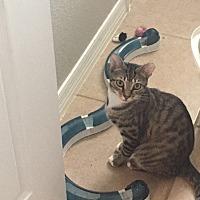 Adopt A Pet :: Abe - St. Cloud, FL