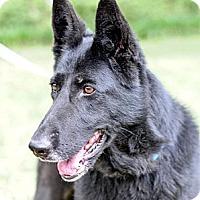 Adopt A Pet :: Mystic - Pike Road, AL