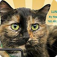 Adopt A Pet :: LUNA - West Lafayette, IN