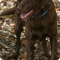 Adopt A Pet :: Jack - Franklin, TN