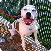 Adopt A Pet :: Chianti ADOPTED!! - Antioch, IL