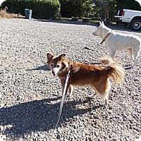 Adopt A Pet :: Allie - Hesperus, CO