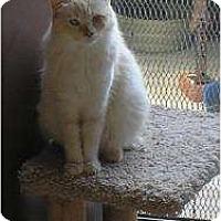 Adopt A Pet :: Pebbles - lake elsinore, CA