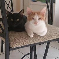 Adopt A Pet :: Tobias - Miami, FL