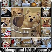 Adopt A Pet :: Jack Sprat - Elmhurst, IL