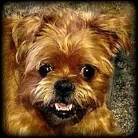 Adopt A Pet :: ROZA in Boulder, CO - Denver, CO