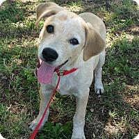 Adopt A Pet :: Jill - Norman, OK