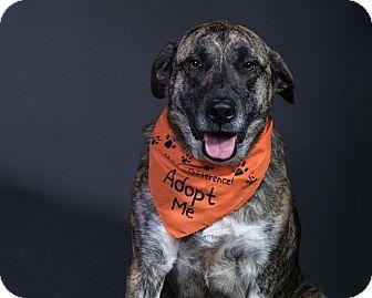 German Shepherd Dog Mix Dog for adoption in Homer, New York - Bo