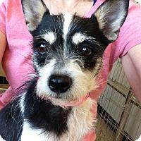 Adopt A Pet :: Skittles - Las Vegas, NV