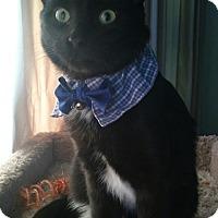 Adopt A Pet :: Kramer - Owatonna, MN