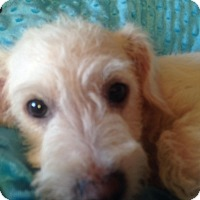 Adopt A Pet :: Sage - Carlsbad, CA
