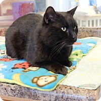 Adopt A Pet :: Panther - Martinsville, IN