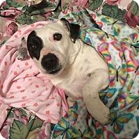 Adopt A Pet :: Lulu - Huntsville, AL