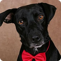 Adopt A Pet :: Buddy - Cincinnati, OH