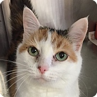 Adopt A Pet :: Little Girl - FEE WAIVED - Seville, OH
