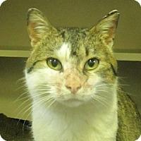Adopt A Pet :: Reuben - Lloydminster, AB