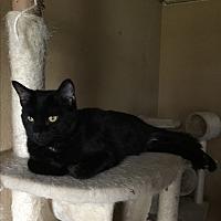 Adopt A Pet :: Dori - Sedalia, MO
