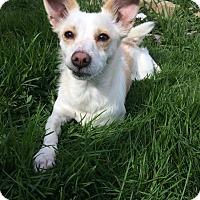 Adopt A Pet :: Johnny - West Allis, WI