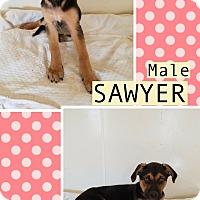 Adopt A Pet :: Sawyer meet me 6/2 - Manchester, CT